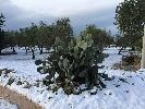 https://www.ragusanews.com//immagini_articoli/01-01-2015/neve-a-scicli-donna-in-procinto-di-parto-soccorsa-danni-in-agricoltura-100.jpg