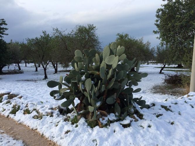 https://www.ragusanews.com//immagini_articoli/01-01-2015/neve-a-scicli-donna-in-procinto-di-parto-soccorsa-danni-in-agricoltura-500.jpg