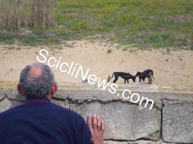 https://www.ragusanews.com//immagini_articoli/01-02-2014/cani-del-pisciotto-sentito-luomo-che-catturo-gli-animali-inselvatichiti-500.jpg