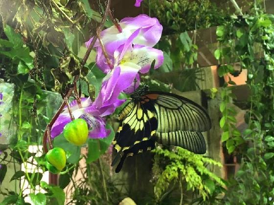 https://www.ragusanews.com//immagini_articoli/01-03-2017/casa-farfalle-inaugura-sabato-1030-420.jpg