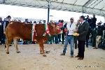 http://www.ragusanews.com//immagini_articoli/01-04-2015/ilenia-e-la-piu-bella-d-italia-100.jpg