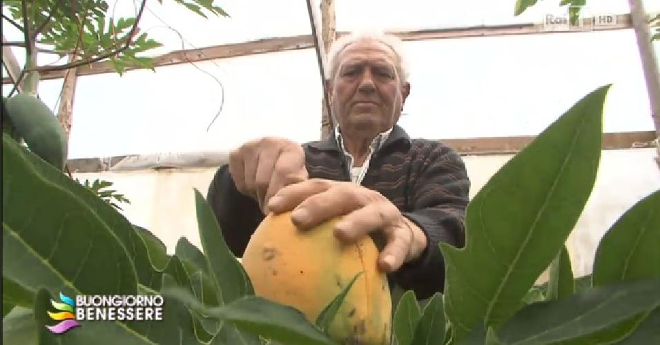 https://www.ragusanews.com//immagini_articoli/01-06-2014/bartolo-arrabito-luomo-della-papaya-intervistato-in-rai-500.jpg