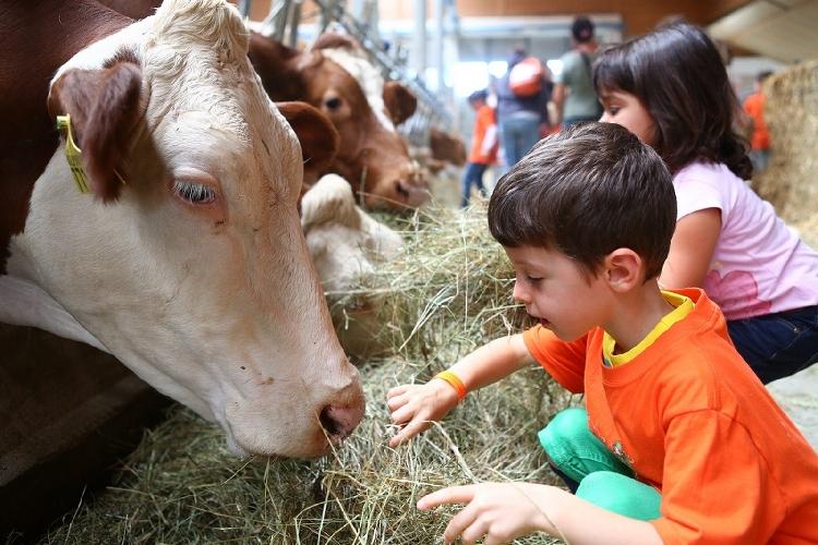 https://www.ragusanews.com//immagini_articoli/01-06-2017/fiera-specialistica-dedicata-razze-bovine-carne-500.jpg