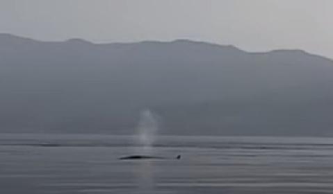 https://www.ragusanews.com//immagini_articoli/01-07-2021/messina-gli-sbuffi-delle-balene-a-torre-faro-video-280.jpg