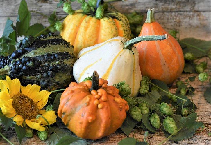 https://www.ragusanews.com//immagini_articoli/01-10-2019/dieta-per-l-autunno-500.jpg