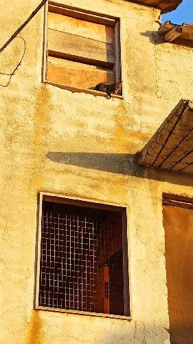 https://www.ragusanews.com//immagini_articoli/01-10-2020/a-scicli-il-gatto-intrappolato-i-pompieri-e-la-macaia-500.jpg