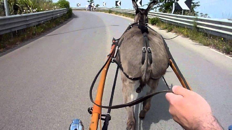 https://www.ragusanews.com//immagini_articoli/02-02-2018/scicli-cade-calesse-elisoccorso-messina-500.jpg