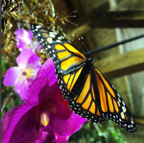 http://www.ragusanews.com//immagini_articoli/02-06-2016/domenica-chiude-la-casa-delle-farfalle-500.png