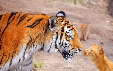 https://www.ragusanews.com//immagini_articoli/02-06-2020/il-virus-era-una-tigre-assassina-ora-e-un-gatto-selvatico-240.jpg