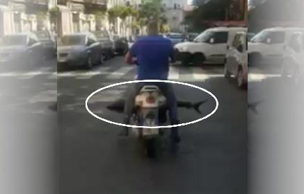 https://www.ragusanews.com//immagini_articoli/02-06-2021/in-motorino-con-lo-squalo-il-video-diventa-virale-280.jpg