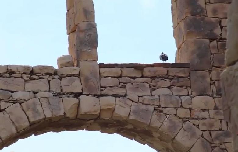 https://www.ragusanews.com//immagini_articoli/02-07-2014/fornace-penna-il-documentario-di-fabrizio-ruggieri-500.jpg