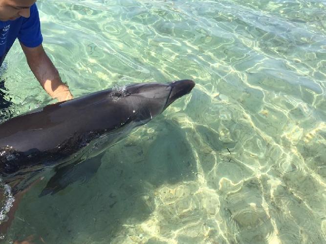 http://www.ragusanews.com//immagini_articoli/02-08-2016/delfino-curioso-video-500.jpg