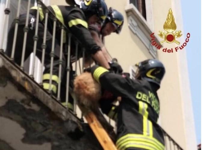 https://www.ragusanews.com//immagini_articoli/02-08-2020/sicilia-coppia-litiga-e-lascia-cane-in-fin-di-vita-sul-balcone-500.jpg