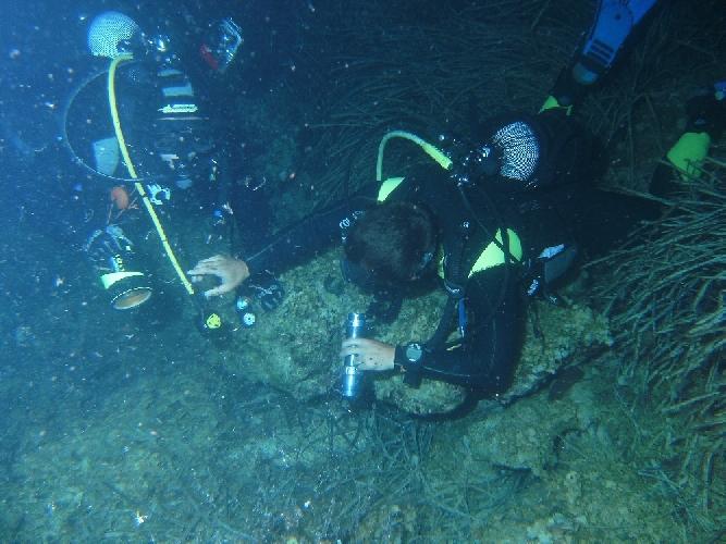 https://www.ragusanews.com//immagini_articoli/02-09-2011/siracusa-ognina-i-sub-iblei-in-immersione-notturna-500.jpg