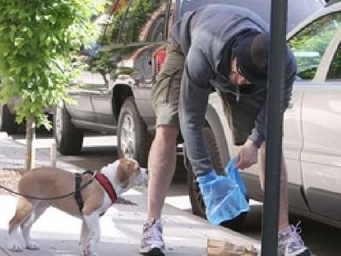 https://www.ragusanews.com//immagini_articoli/02-09-2014/i-vigili-controllano-la-cacca-dei-cani-500.jpg