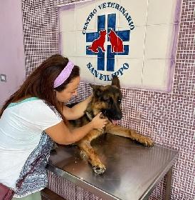 https://www.ragusanews.com//immagini_articoli/02-09-2021/monterosso-il-cane-sequestrato-ha-il-femore-rotto-anni-di-bastonate-280.jpg
