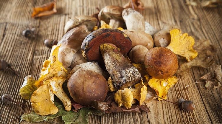 https://www.ragusanews.com//immagini_articoli/02-11-2016/fiera-del-fungo-degustazioni-convegni-prodotti-del-territorio-420.jpg