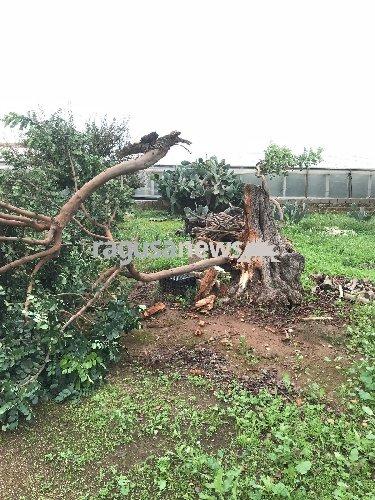 https://www.ragusanews.com//immagini_articoli/02-11-2018/tromba-aria-cava-aliga-danni-colture-foto-500.jpg