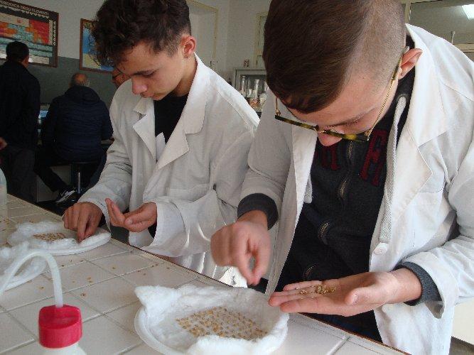 https://www.ragusanews.com//immagini_articoli/02-12-2019/1575281727-al-sementificio-ricca-gli-studenti-imparano-la-granicoltura-2-500.jpg