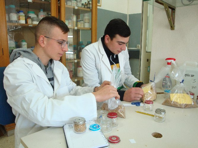 https://www.ragusanews.com//immagini_articoli/02-12-2019/1575281728-al-sementificio-ricca-gli-studenti-imparano-la-granicoltura-3-500.jpg
