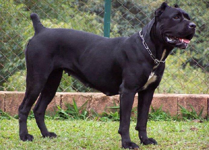 https://www.ragusanews.com//immagini_articoli/03-01-2018/portopalo-corriere-morto-circostanze-misteriose-forse-morso-cani-500.jpg