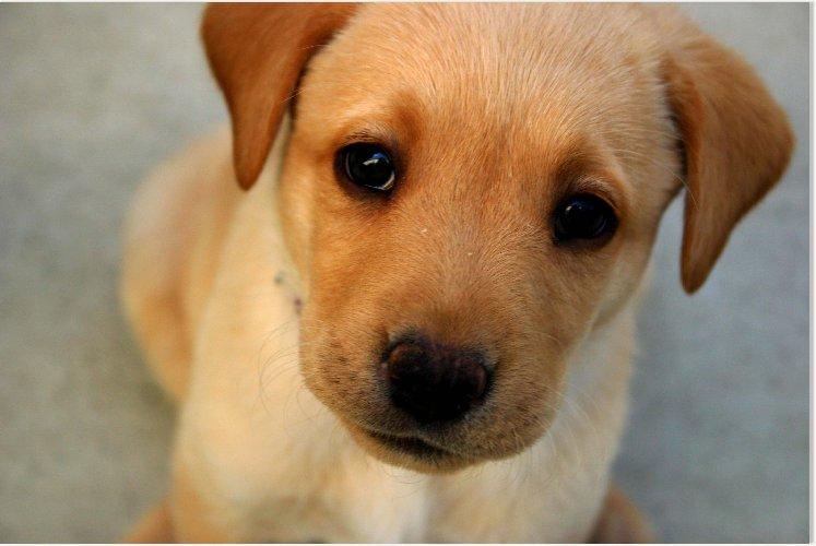 https://www.ragusanews.com//immagini_articoli/03-01-2020/cagnolini-in-cerca-di-adozione-500.jpg