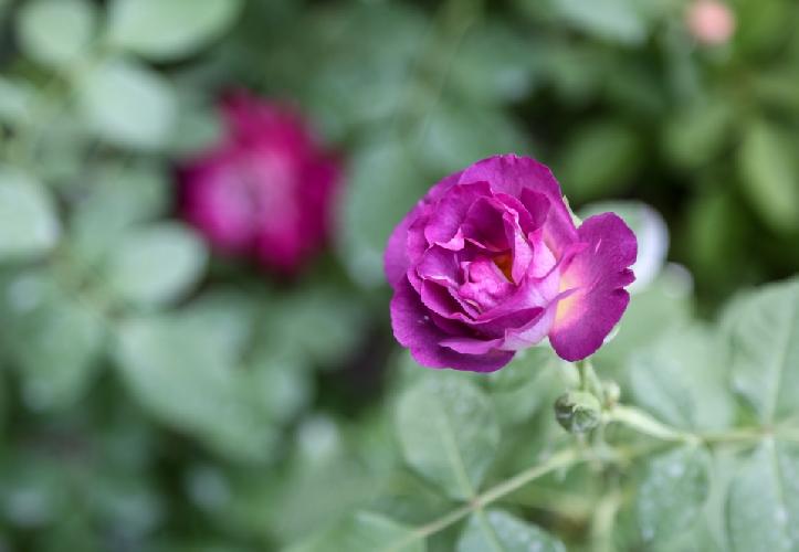 http://www.ragusanews.com//immagini_articoli/03-03-2016/modica-flower-show-500.jpg