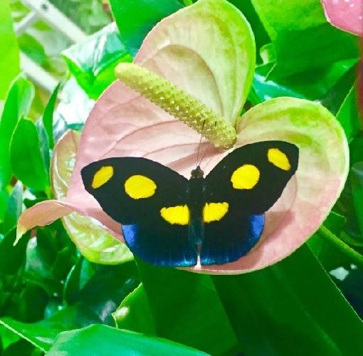https://www.ragusanews.com//immagini_articoli/03-03-2017/sogno-prima-nata-casa-farfalle-500.jpg