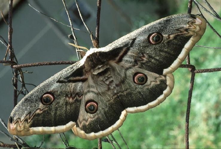 https://www.ragusanews.com//immagini_articoli/03-05-2016/la-farfalla-piu-grande-del-mondo-fuggita-e-beata-500.jpg