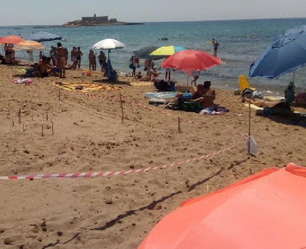 https://www.ragusanews.com//immagini_articoli/03-07-2020/nidi-di-tartarughe-a-maganuco-e-portopalo-500.jpg