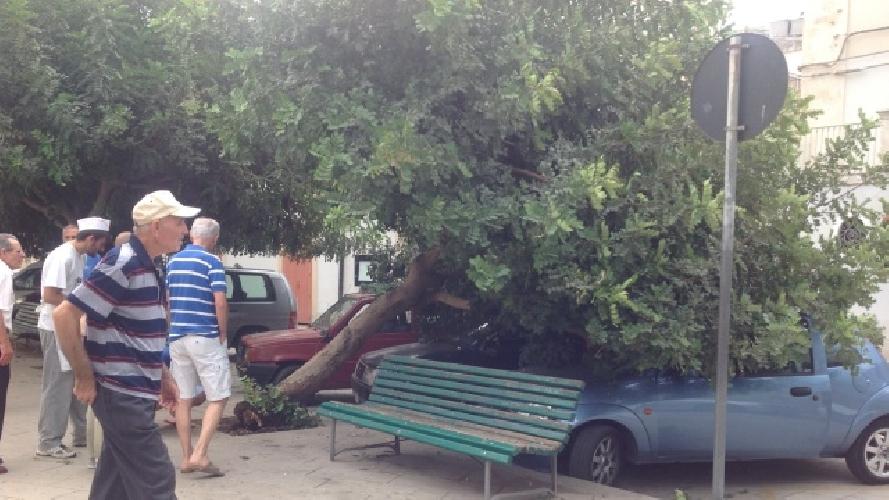 http://www.ragusanews.com//immagini_articoli/03-08-2014/albero-rovina-su-due-auto-in-sosta-500.jpg