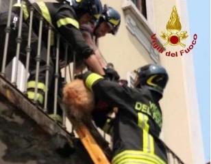 https://www.ragusanews.com//immagini_articoli/03-08-2020/morto-il-cane-abbandonato-dalla-coppia-in-balcone-240.jpg