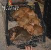 http://www.ragusanews.com//immagini_articoli/03-09-2016/cani-denutriti-e-maltrattati-denunciato-il-proprietario-di-un-azienda-100.jpg