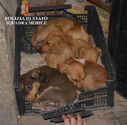 http://www.ragusanews.com//immagini_articoli/03-09-2016/cani-denutriti-e-maltrattati-denunciato-il-proprietario-di-un-azienda-420.jpg