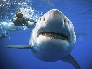 https://www.ragusanews.com//immagini_articoli/03-09-2020/squali-nel-mare-trapanese-capitaneria-fate-attenzione-240.jpg