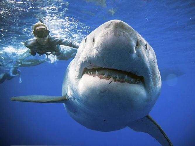 https://www.ragusanews.com//immagini_articoli/03-09-2020/squali-nel-mare-trapanese-capitaneria-fate-attenzione-500.jpg