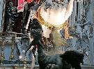 https://www.ragusanews.com//immagini_articoli/03-09-2021/l-invasione-di-coccodrilli-a-ragusa-100.jpg