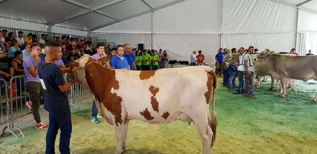https://www.ragusanews.com//immagini_articoli/03-10-2019/l-agrario-di-modica-stravince-fiera-agricola-500.jpg