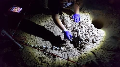https://www.ragusanews.com//immagini_articoli/03-10-2021/1633247573-nascono-le-tartarughe-nel-parco-archeologico-in-sicilia-1-280.jpg