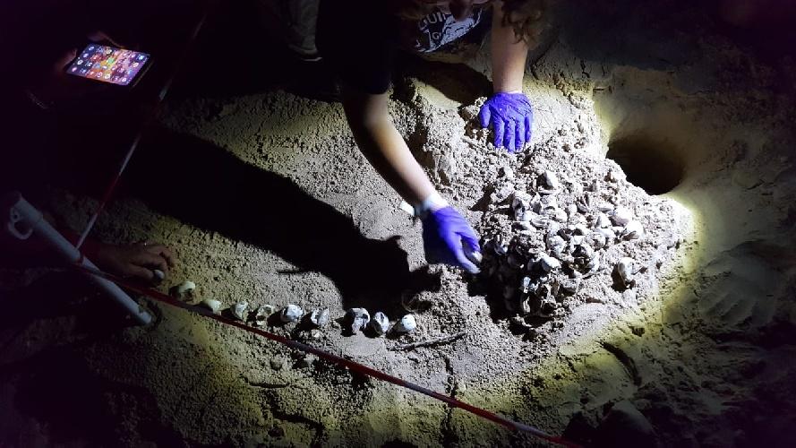 https://www.ragusanews.com//immagini_articoli/03-10-2021/1633247573-nascono-le-tartarughe-nel-parco-archeologico-in-sicilia-1-500.jpg