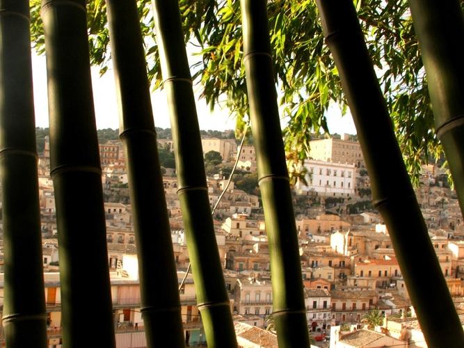 http://www.ragusanews.com//immagini_articoli/03-11-2014/il-giardino-dei-bambu-a-modica-500.jpg