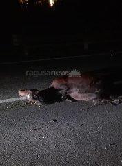 https://www.ragusanews.com//immagini_articoli/03-12-2019/auto-travolge-e-uccide-un-cavallo-240.jpg