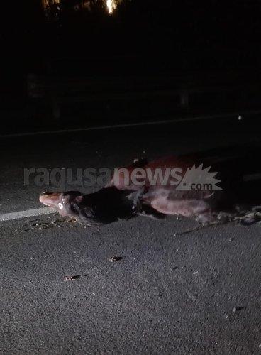https://www.ragusanews.com//immagini_articoli/03-12-2019/auto-travolge-e-uccide-un-cavallo-500.jpg