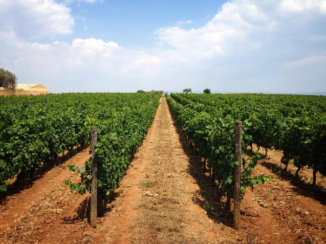 https://www.ragusanews.com//immagini_articoli/04-01-2016/nuovi-impianti-vitivinicoli-appuntamento-il-7-gennaio-500.jpg