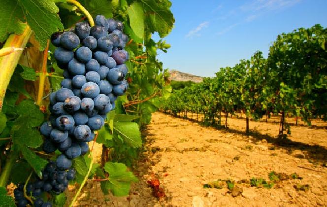 http://www.ragusanews.com//immagini_articoli/04-01-2017/arriva-registro-telematico-vino-420.jpg