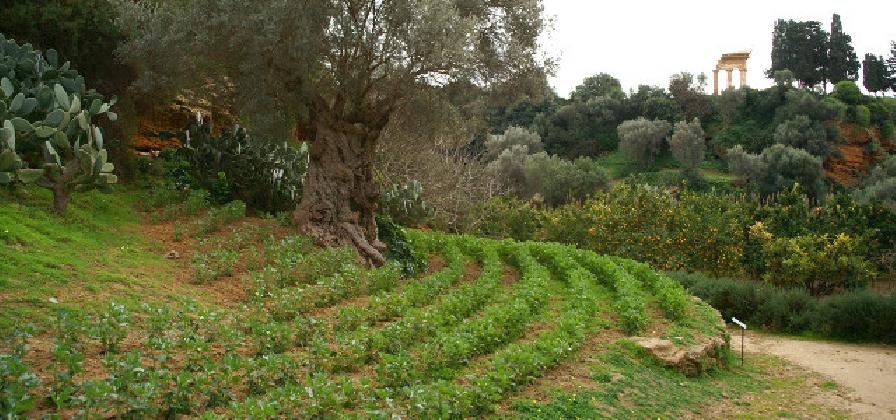 http://www.ragusanews.com//immagini_articoli/04-02-2017/giardini-kolymbethra-tour-online-grazie-420.jpg