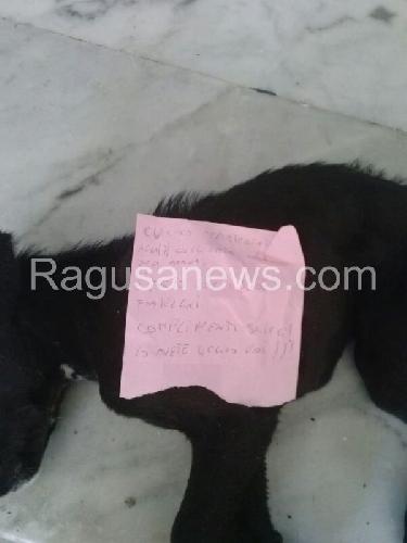 http://www.ragusanews.com//immagini_articoli/04-03-2014/un-cane-morto-sulle-scale-del-municipio-di-scicli-500.jpg