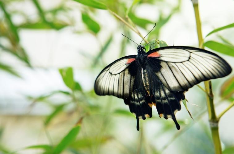 https://www.ragusanews.com//immagini_articoli/04-03-2017/modica-farfalle-tropicali-500.jpg