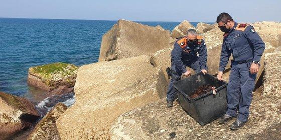 https://www.ragusanews.com//immagini_articoli/04-03-2021/sequestrati-1500-ricci-di-mare-pescati-illegalmente-a-punta-braccetto-280.jpg