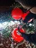 http://www.ragusanews.com//immagini_articoli/04-04-2016/il-piccolo-principe-dei-palloncini-rossi-100.jpg